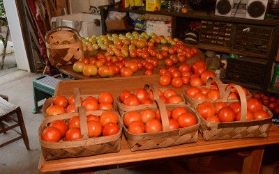 Meet Dr. Dolittle's Cousin – The Tomato Man