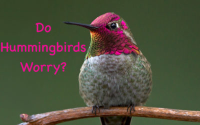 Do Hummingbirds Worry?